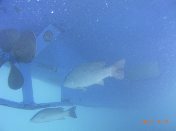 Underwater shot of Bermuda dive boat
