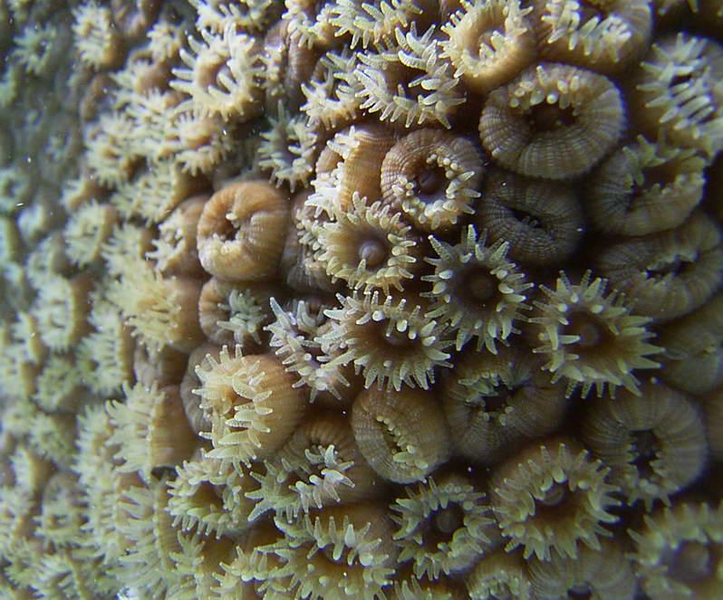 Bermuda Marine Invertebrates