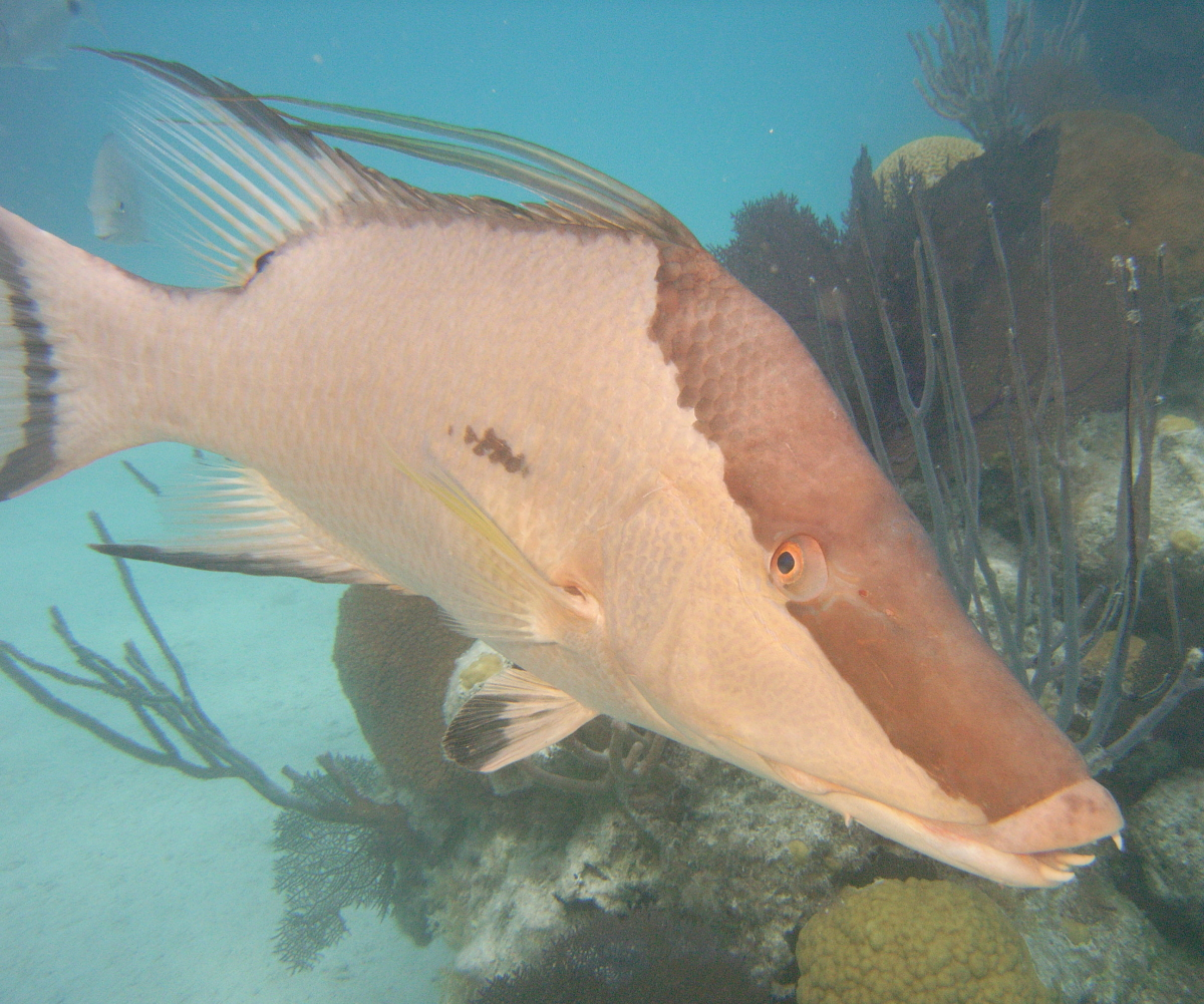 Fish you see in bermuda with greg hartley for Fishing in bermuda