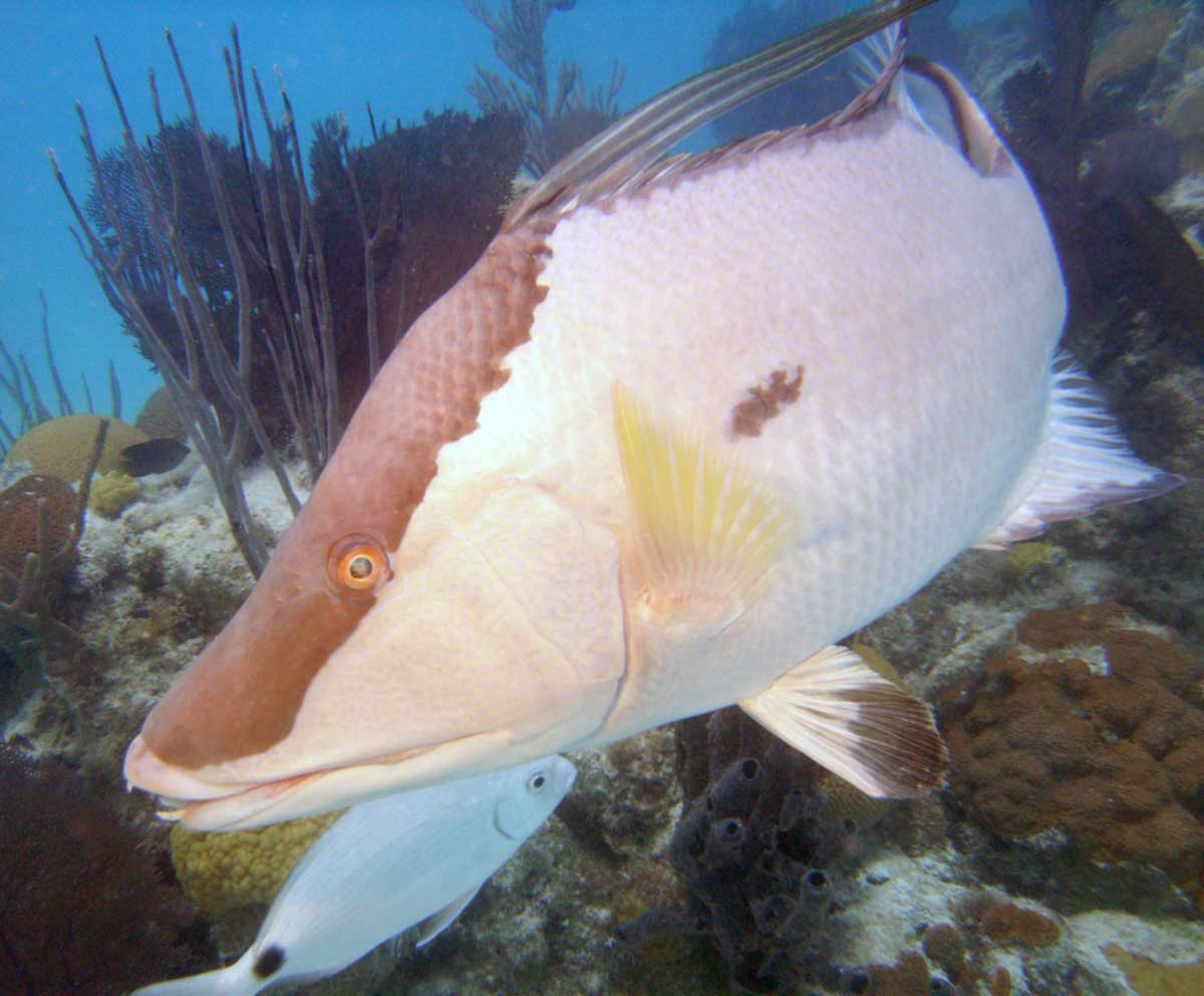 Hartley helmet diving in bermuda awesome fun for for Your inner fish sparknotes