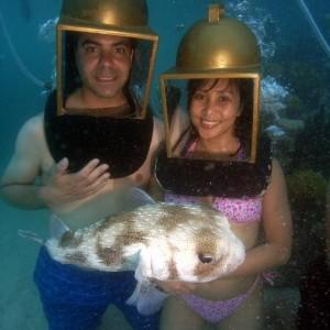 porcupine puffer in Bermuda